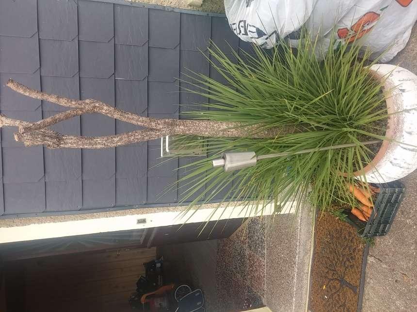 meiner 6j hrigen palme fehlt etwas ist sie krank seite 1 yucca agaven. Black Bedroom Furniture Sets. Home Design Ideas